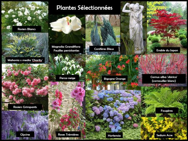 plantes sélectionnées