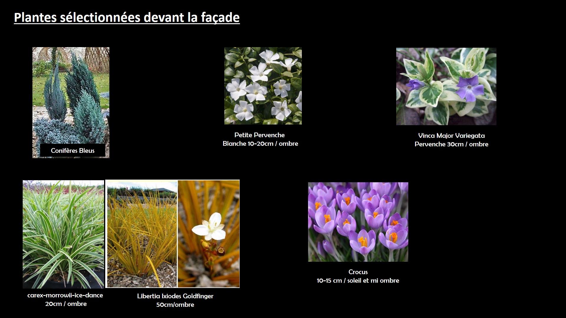 plantes jardinet de façade (plus sec)